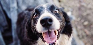 Mokra czy sucha karma? Czym karmić psa?
