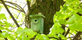 Domek dla ptaków od przedszkolaków