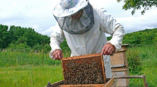 Pszczelarze mogą ubiegać się o dotacje
